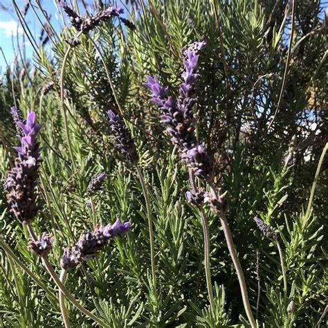 Nourish & Thrive Naturopathy And Massage | 390 Main North Road, Clare, South Australia 5453 | +61 407 681 576