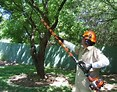 Image result for first coast tree. Size: 117 x 92. Source: dm1files.storage.live.com