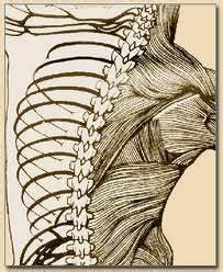 Optimal Chiropractic Clinic / Optimal Chiropractic Animal Care | 31 Liverpool Road, Kilsyth, Victoria 3137 | +61 3 97237470