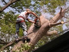 Atlantic-Green Valley Tree Service Inc   PO Box 402, Chatham, NJ, 07928   +1 (973) 635-0637