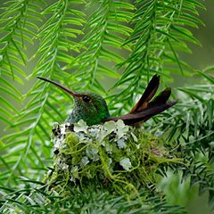 Who built this cute nest?