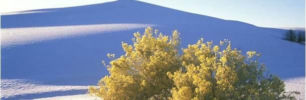 ホワイトサンズ国定公園 (米国、ニューメキシコ州)