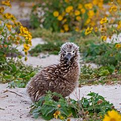 Where's Midway Atoll?