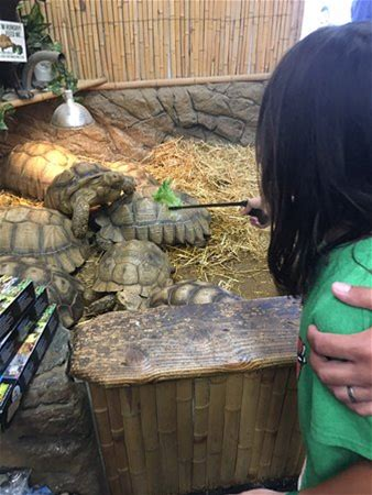 Learn more about The Reptile Zoo
