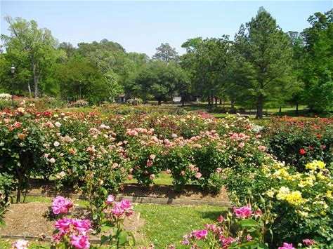 Learn more about Tyler Rose Park