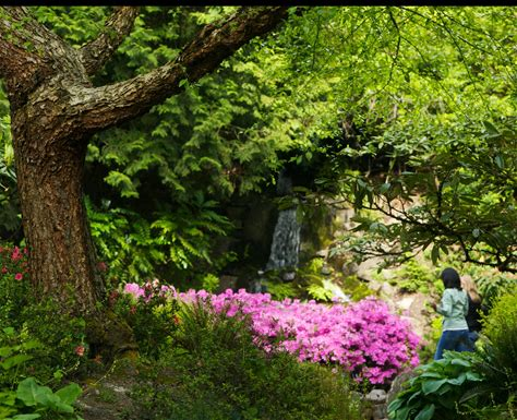 Learn more about Crystal Springs Rhododendron Garden
