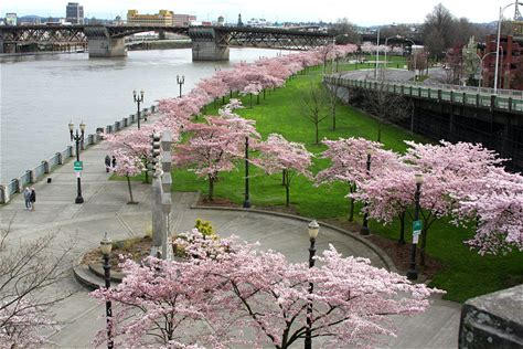 Learn more about Tom McCall Waterfront Park