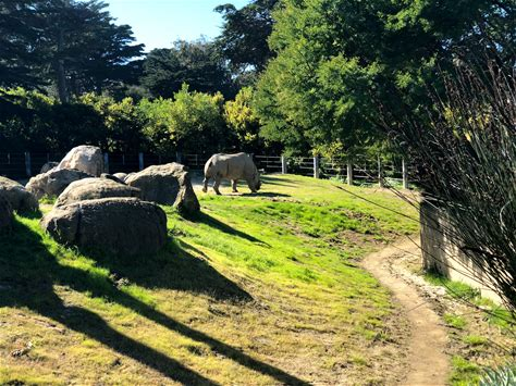 Learn more about San Francisco Zoo