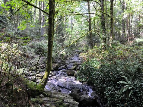 Learn more about Tryon Creek State Natural Area