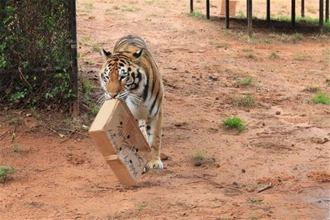 Learn more about Tiger Creek Animal Sanctuary