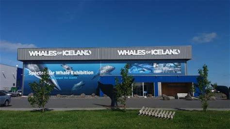 Learn more about Whales of Iceland