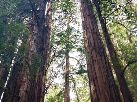 Learn more about Muir Woods National Monument