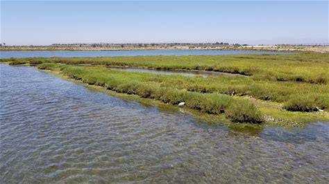 Learn more about Bolsa Chica Ecological Reserve