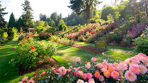 Learn more about International Rose Test Garden