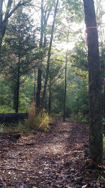 Learn more about Mineola Nature Preserve