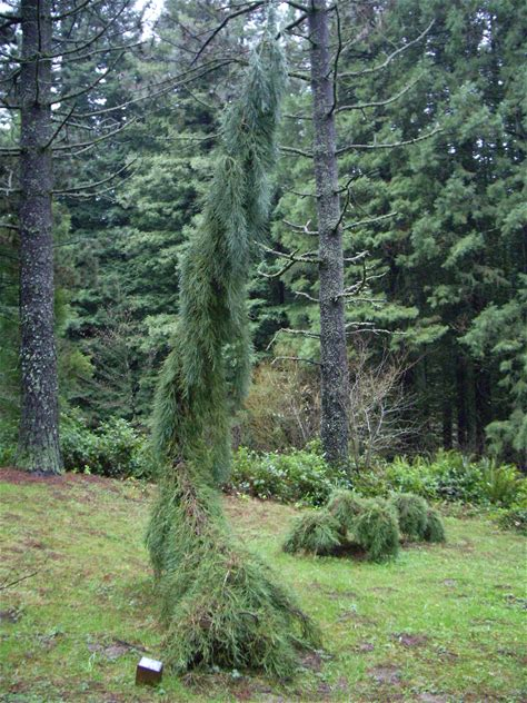 Learn more about Hoyt Arboretum