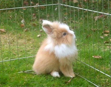 Tinkerbella Rabbit & Guinea Pig Boarding Hotel/ Groomers | 11 The Rowans, Poulton Le Fylde FY6 7UW | +44 1253 896485