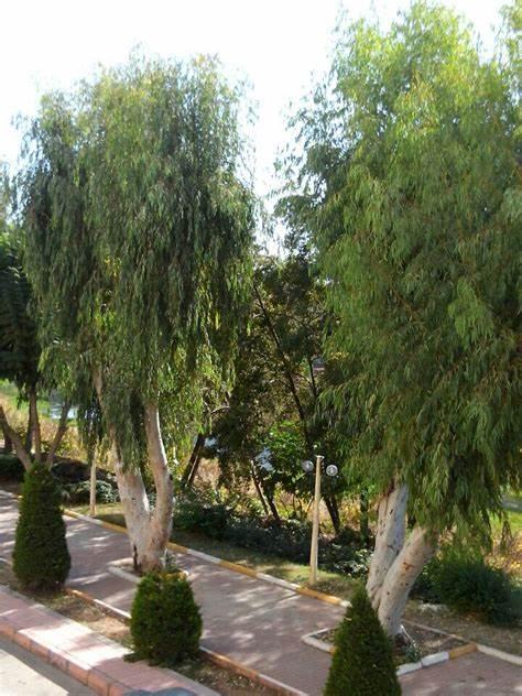 Aytaş Medya | Hamidiye Mahallesi Gültaş Apt. 77/B, 33010 Yenisehir/Mersin | +90 324 239 25 90