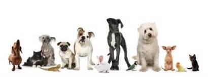 Companion Veterinary Hospital of Wayne   1510 Hamburg Tpke, Wayne, NJ, 07470   +1 (973) 832-7474