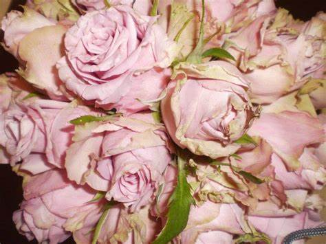 A Epping Florist | 41 May Road, Lalor, Victoria 3075 | +61 3 9464 5590
