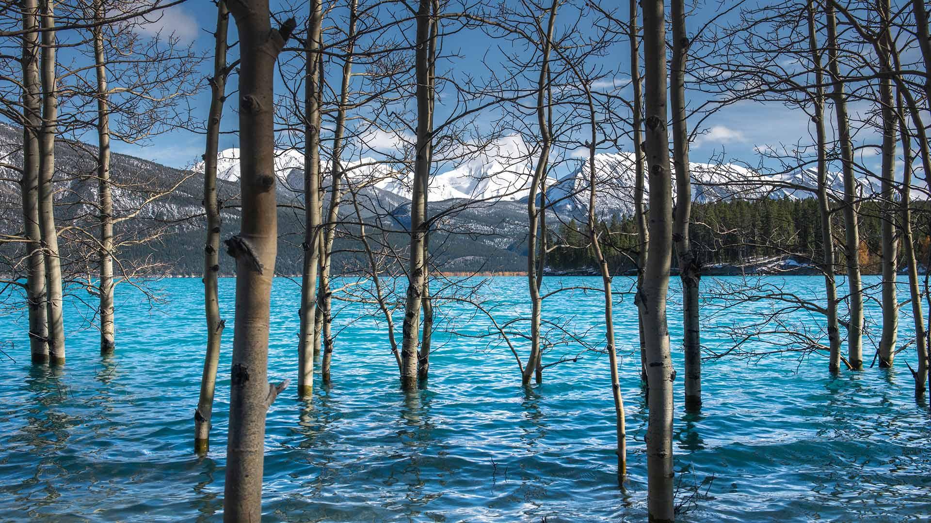 「アブラハム湖」カナダ, アルバータ州 (© Coolbiere/Getty Images)