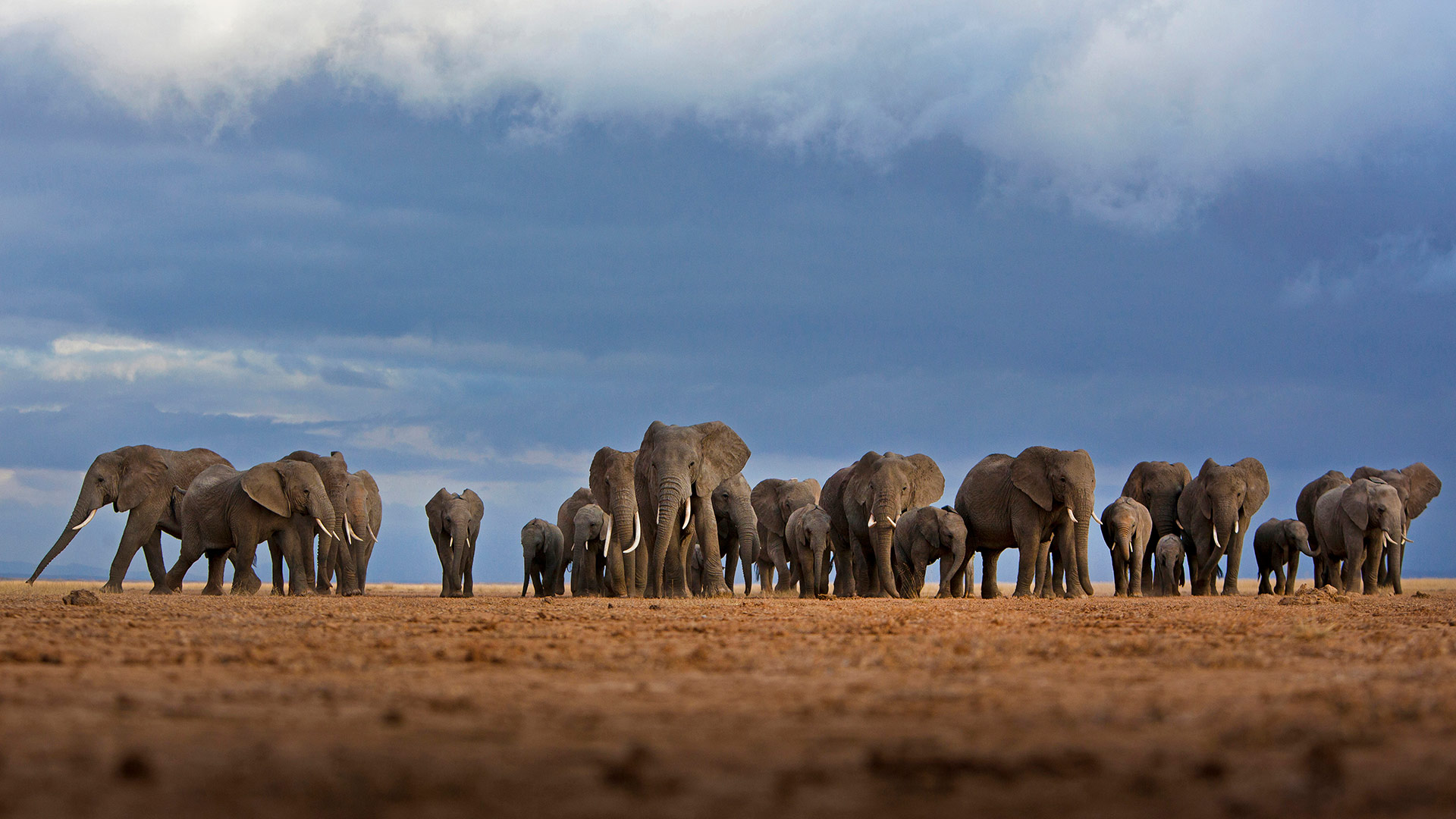 Elephants in Amboseli National Park, Kenya (© Adam Bannister/Offset)(Bing United States)
