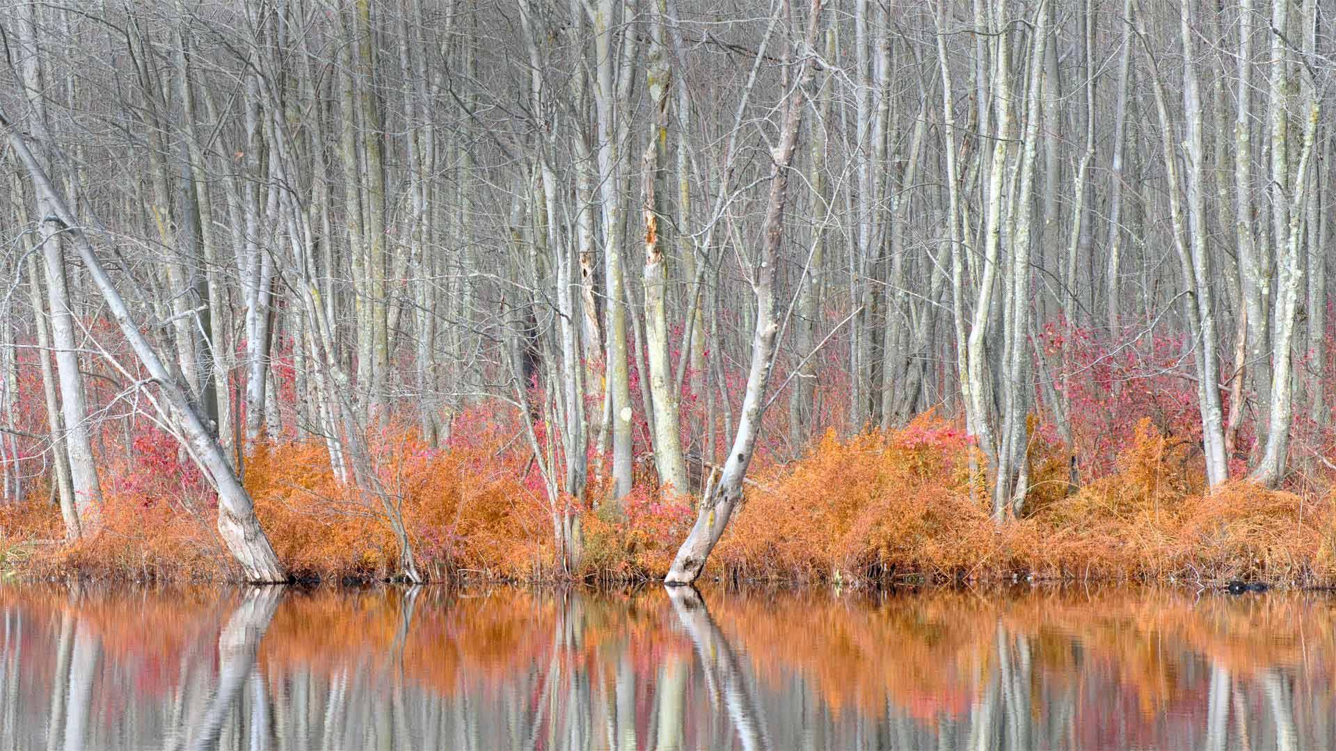 Beaver Lake Nature Center, New York (© Chris Murray/Alamy)(Bing United States)
