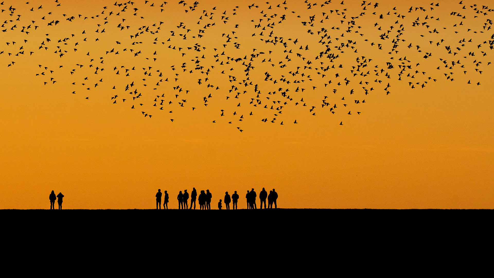 Starlings in the wetlands between Denmark and Germany (© Viking/Alamy)(Bing United States)