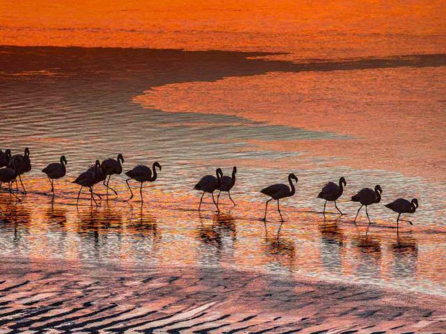 Flamingos in the Eduardo Avaroa Andean Fauna National Reserve in Bolivia (© Art Wolfe/Danita Delimont)