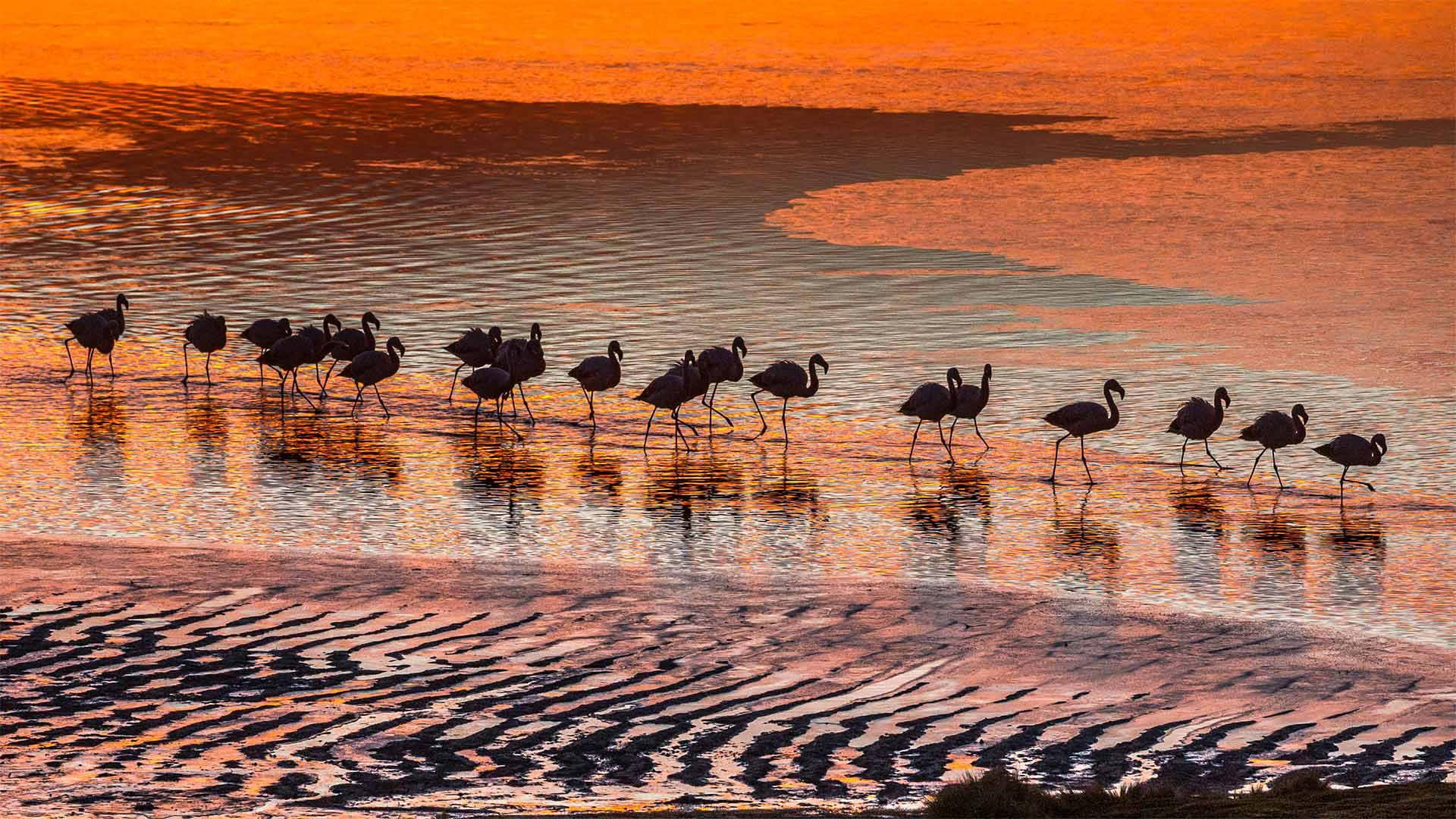 「ラグナ・コロラダのフラミンゴ」ボリビア, ポトシ県 (© Art Wolfe/Danita Delimont)