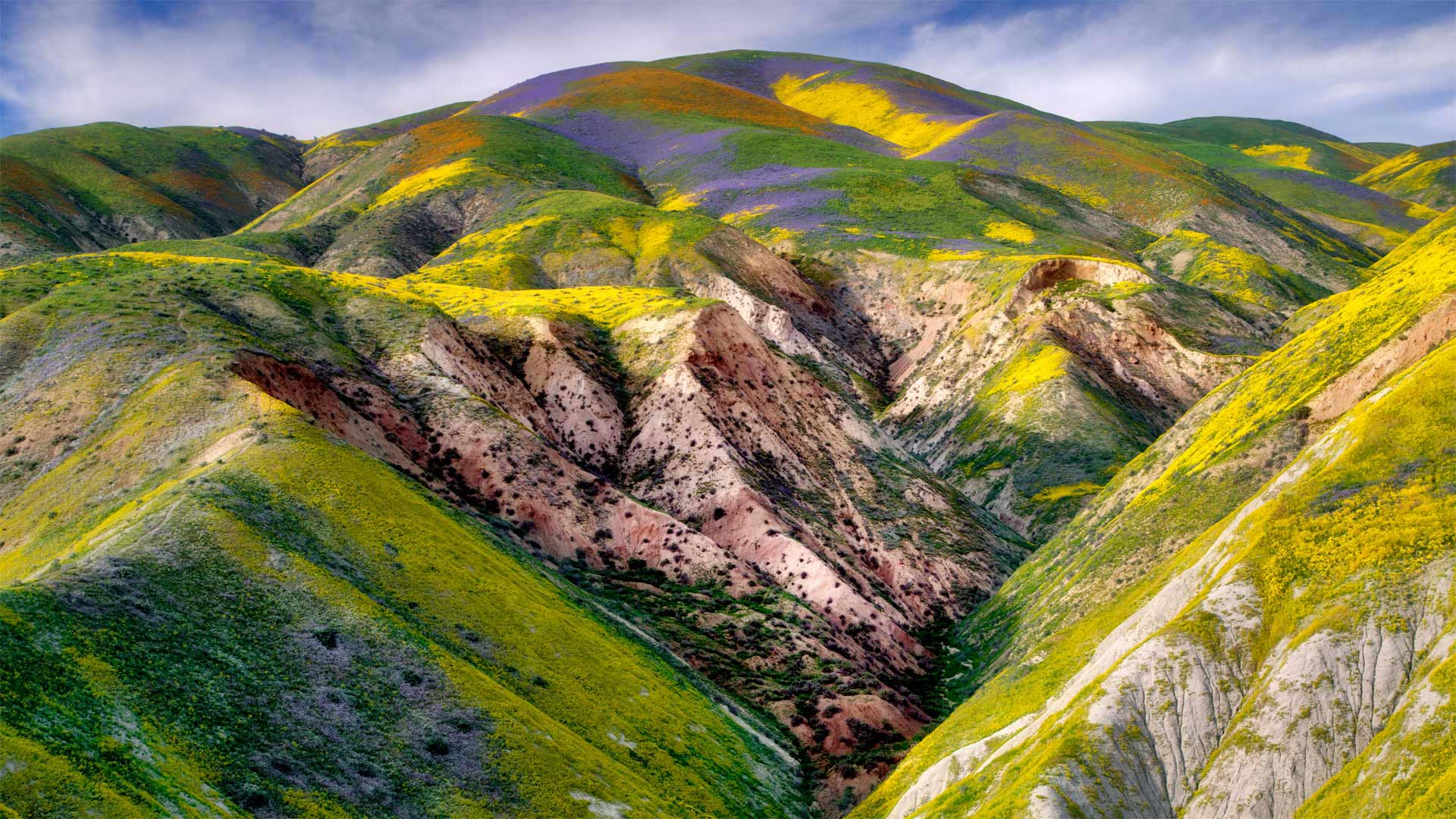 「カリゾ平原の野の花」米国, カリフォルニア州 (© Dennis Frates/Alamy Stock Photo)