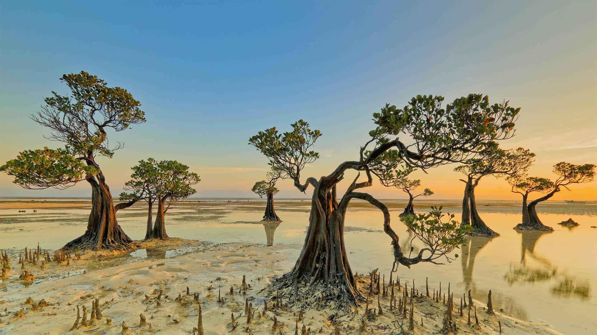 Mangrove trees, Walakiri Beach, Sumba Island, Indonesia (© Tengguo Wu/Getty Images)(Bing United States)