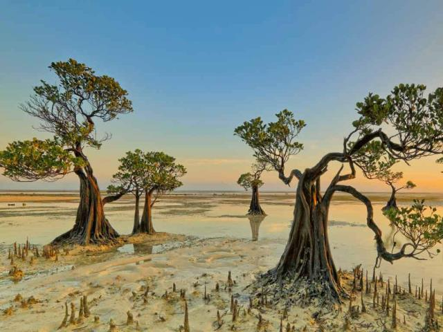 Mangrove trees, Walakiri Beach, Sumba Island, Indonesia (© Tengguo Wu/Getty Images)