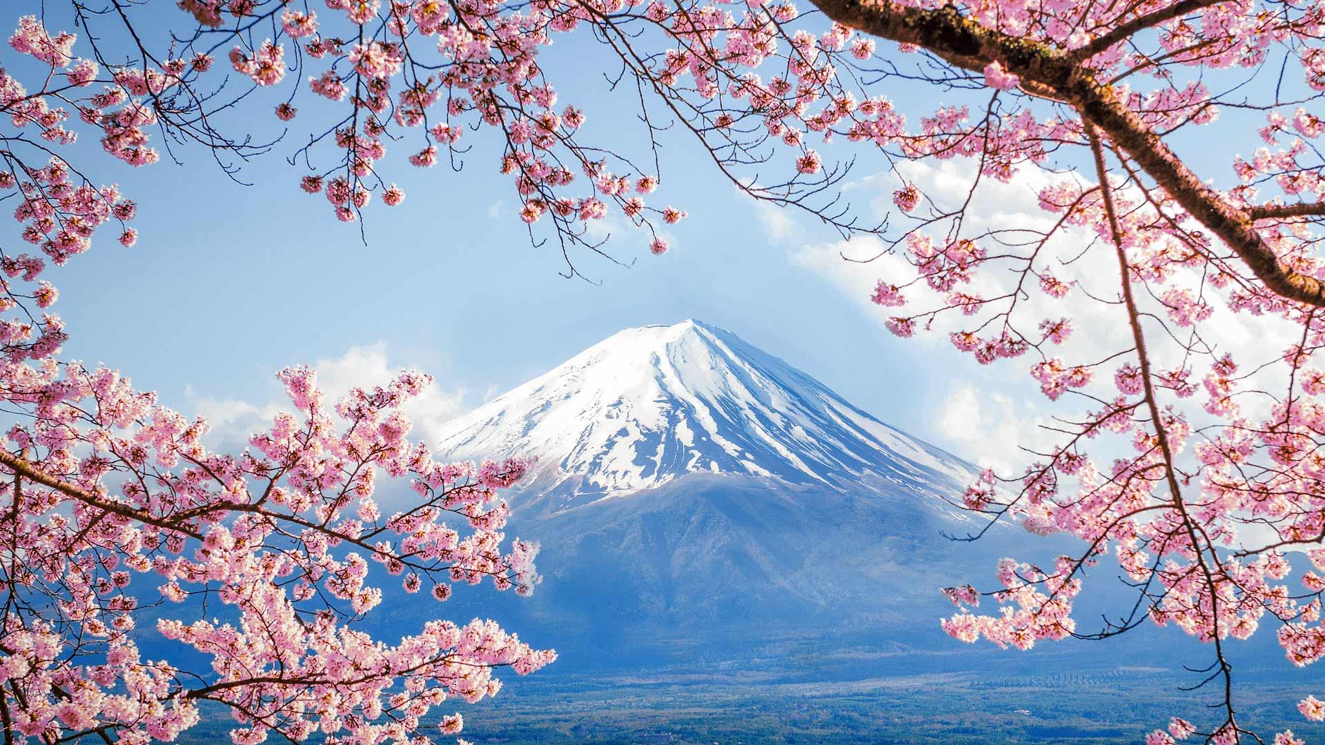 「富士山と桜」山梨, 河口湖 (©  DoctorEgg/Getty Images)
