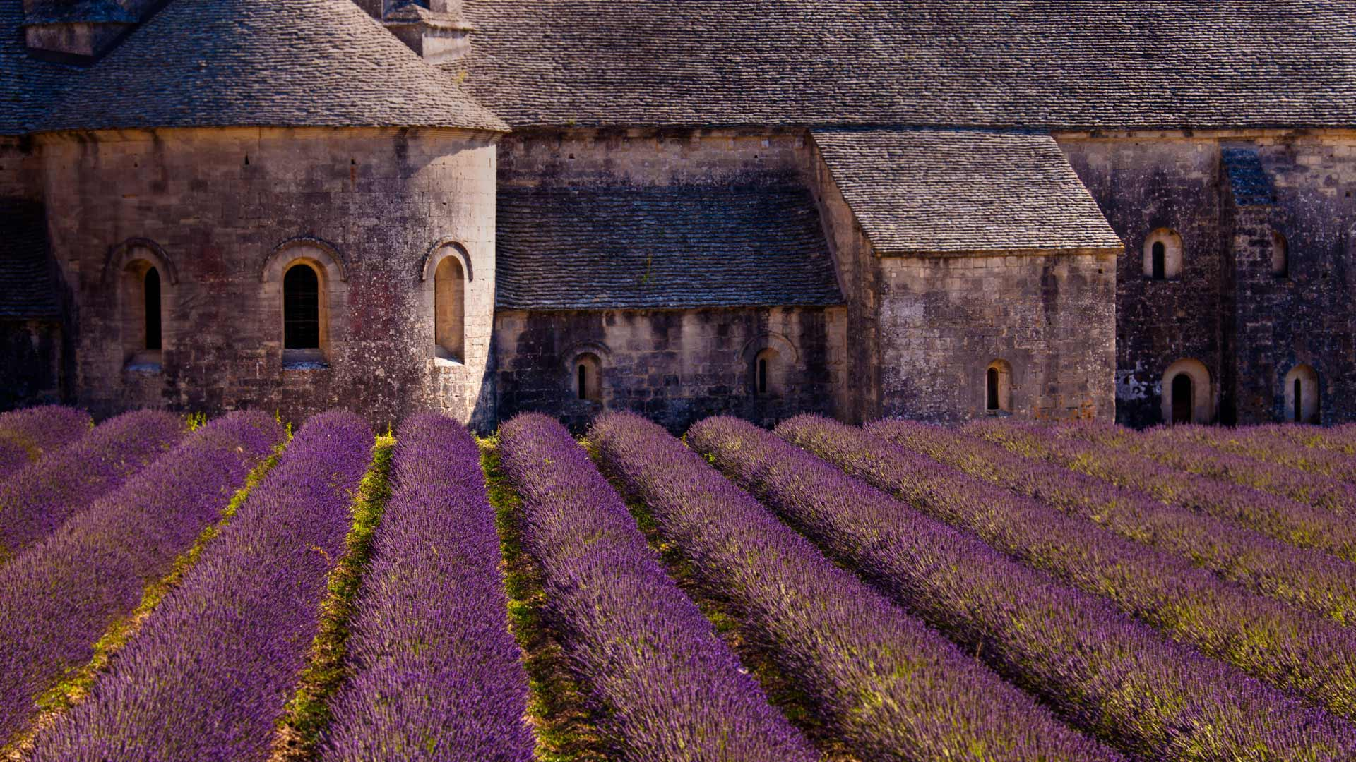 Lavender fields in the Senanque Abbey France, Provence-Alpes-Côte d'Azur (© Carlos Sanchez Pereyra / plainpicture)