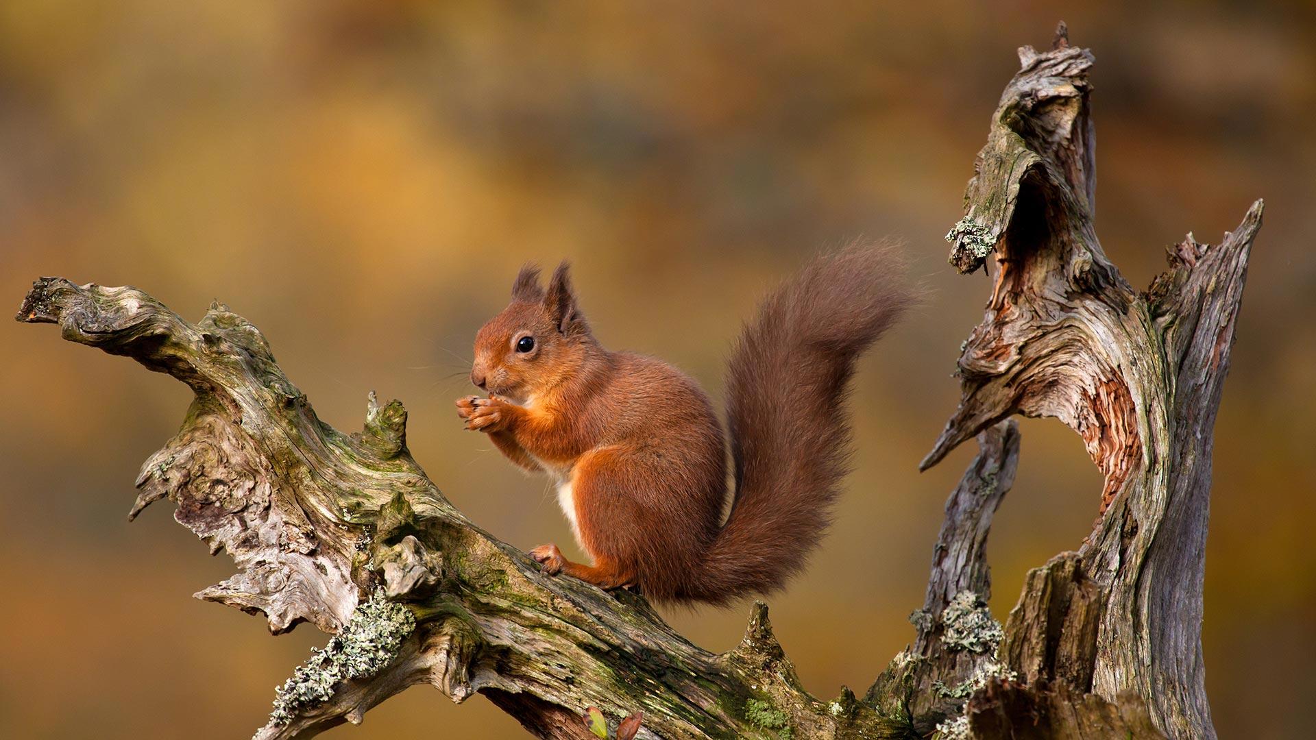 「キタリス」イギリス, スコットランド (© Images from BarbAnna/Getty Images)