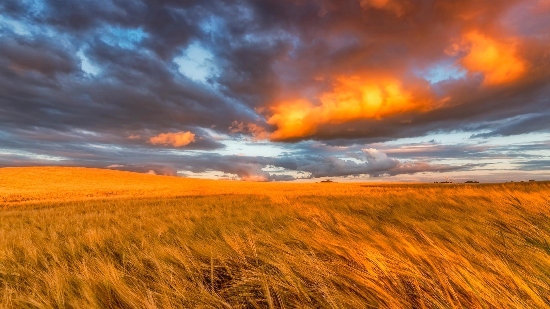 Barley field in East Lothian, Scotland (© Scott Masterton/plainpicture)(Bing United States)