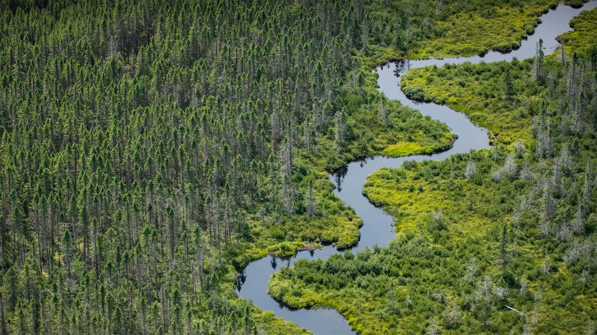 La rivière de Norcross Brook et des zones humides près du lac de Moosehead dans le comté de Piscataquis, Maine, États-Unis (© Aaron Black-Schmidt/Tandem Stills + Motion)(Bing France)