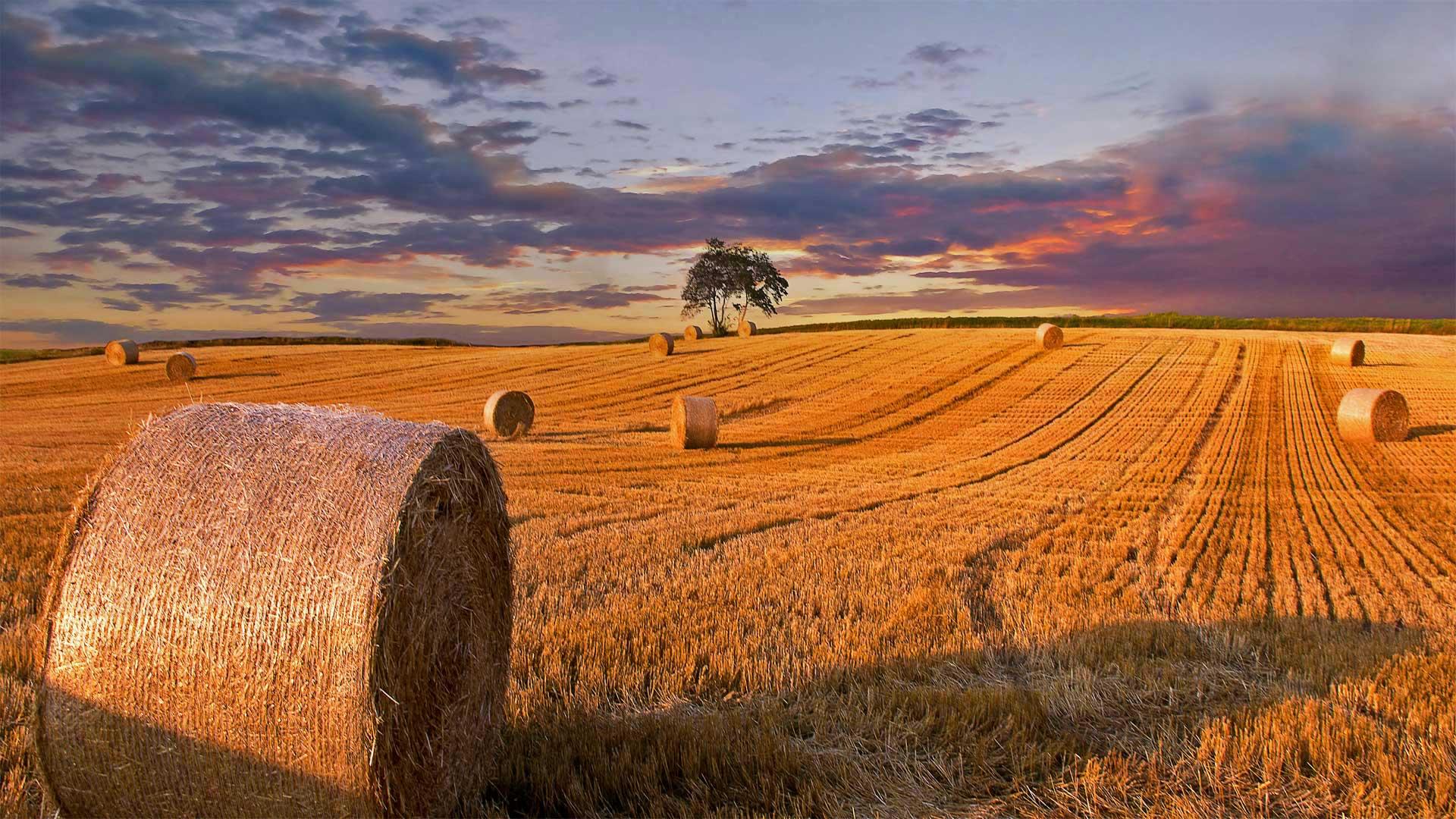 「麦わらロール」デンマーク, ユトランド半島 (© Nick Brundle Photography/Getty Images)