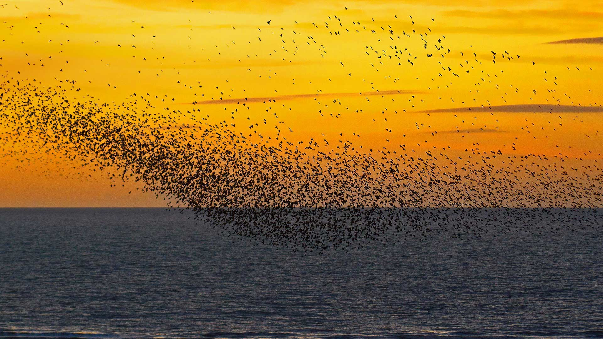 Starlings at sunset in Blackpool, England (© Mediaworld Images/Alamy)(Bing United States)