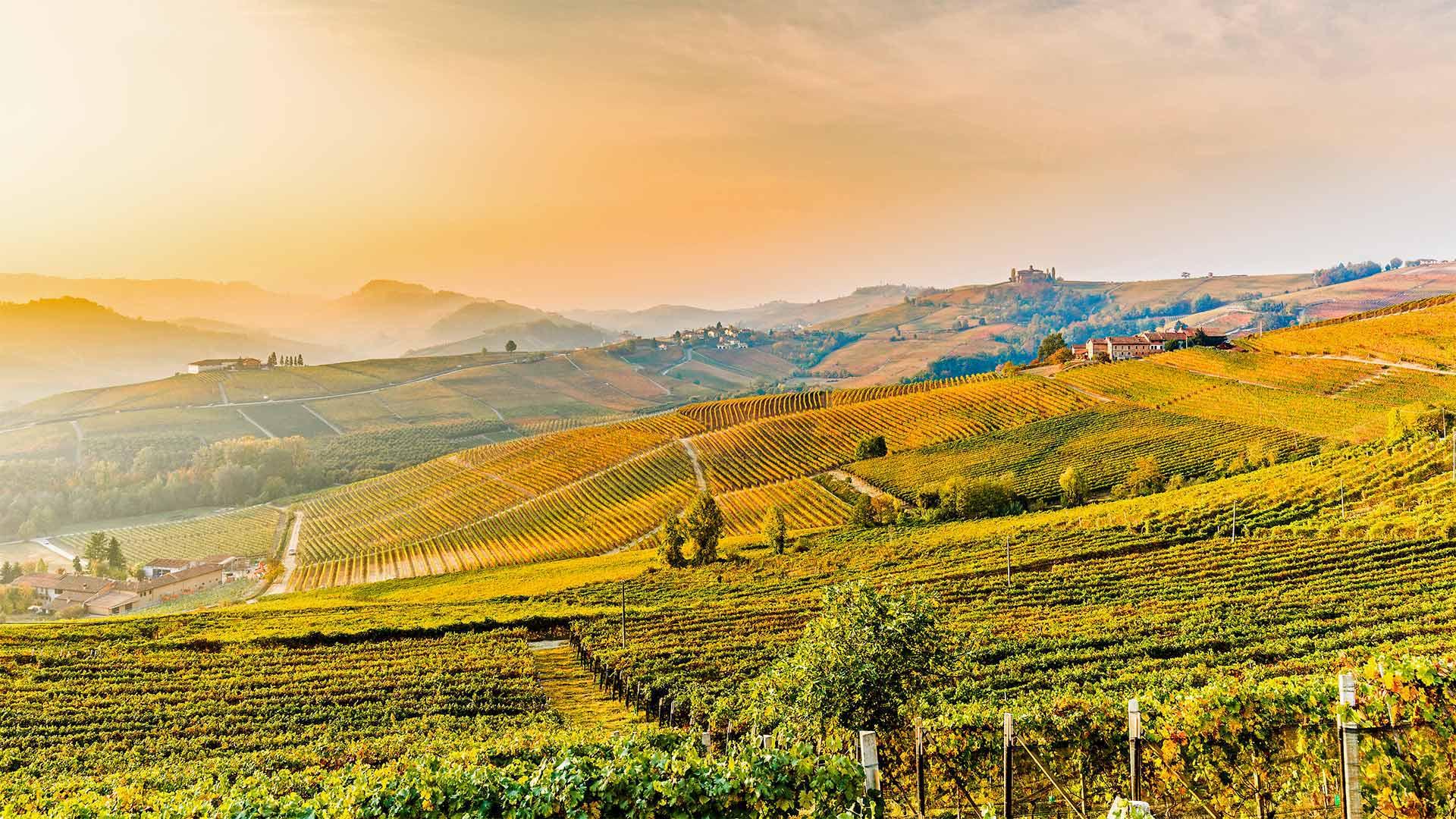 「バローロのワインヤード」イタリア, ピエモンテ州 (© Marco Arduino/eStock Photo)