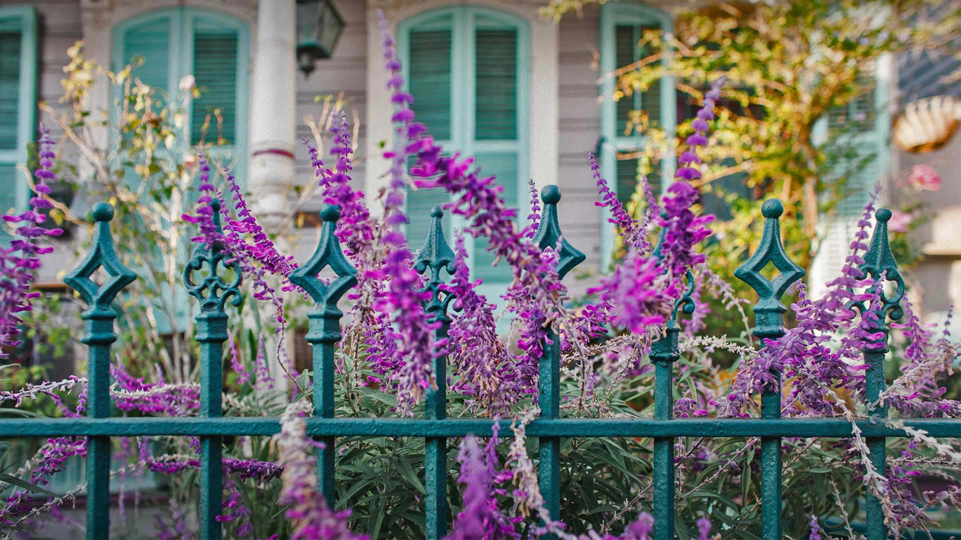 Flowers and an ironwork fence in front of a house in New Orleans, Louisiana (© Lauren Mitchell/Offset by Shutterstock)(Bing United States)