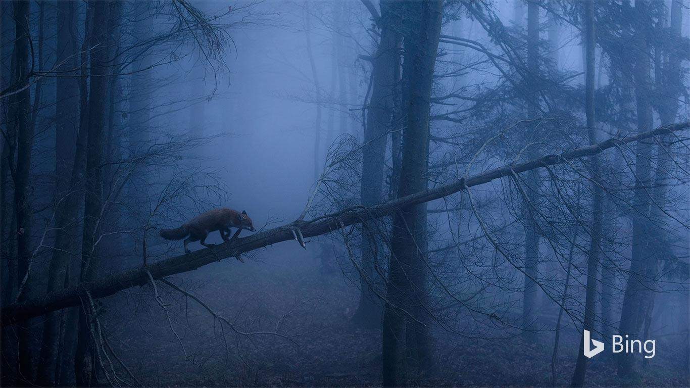 Auf der Pirsch im Schwarzwald