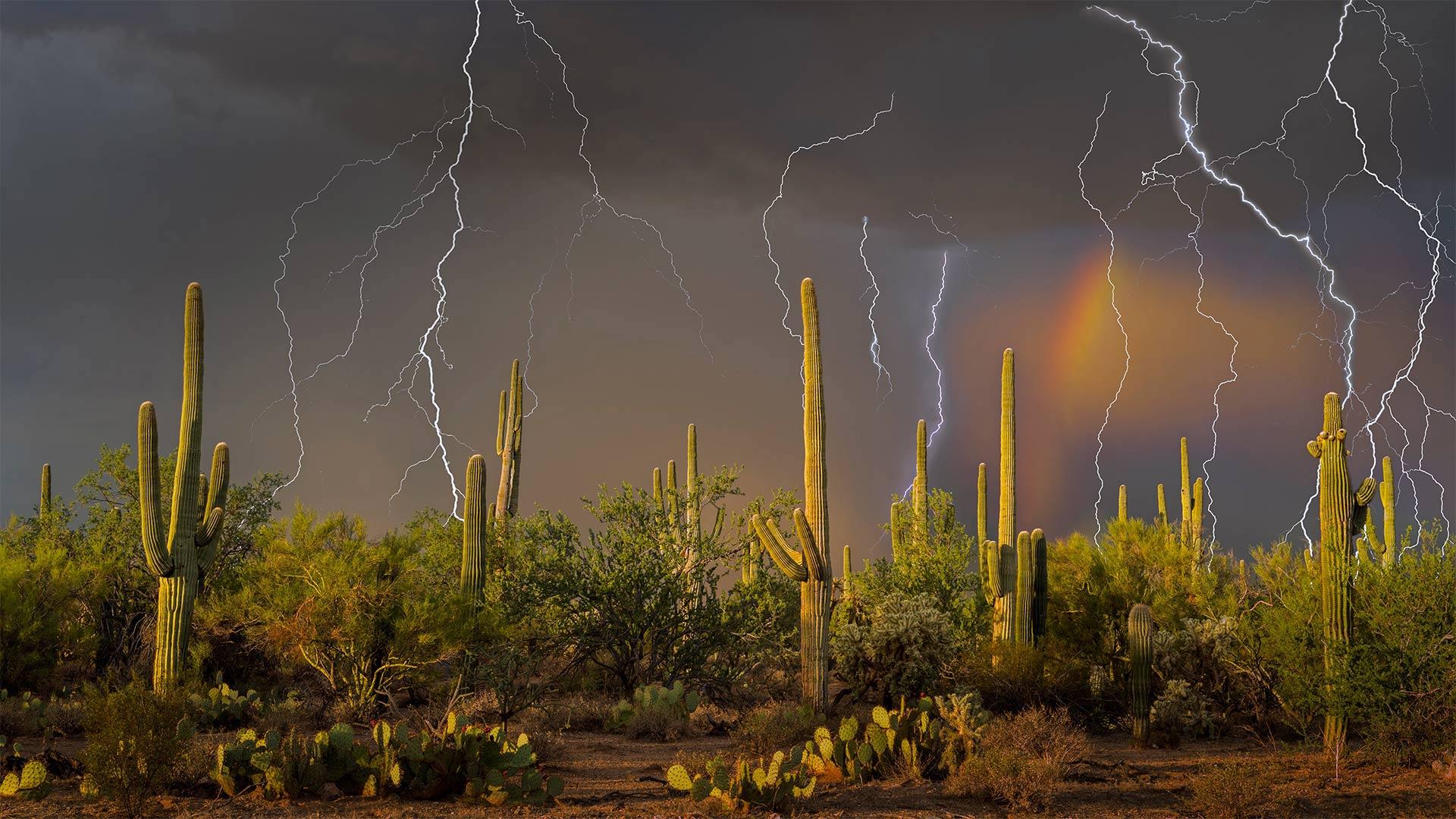 Lightning storm in the Tortolita Mountain foothills, north of Tucson, Arizona, in the Sonoran Desert (© Jack Dykinga/Minden Pictures)(Bing United States)