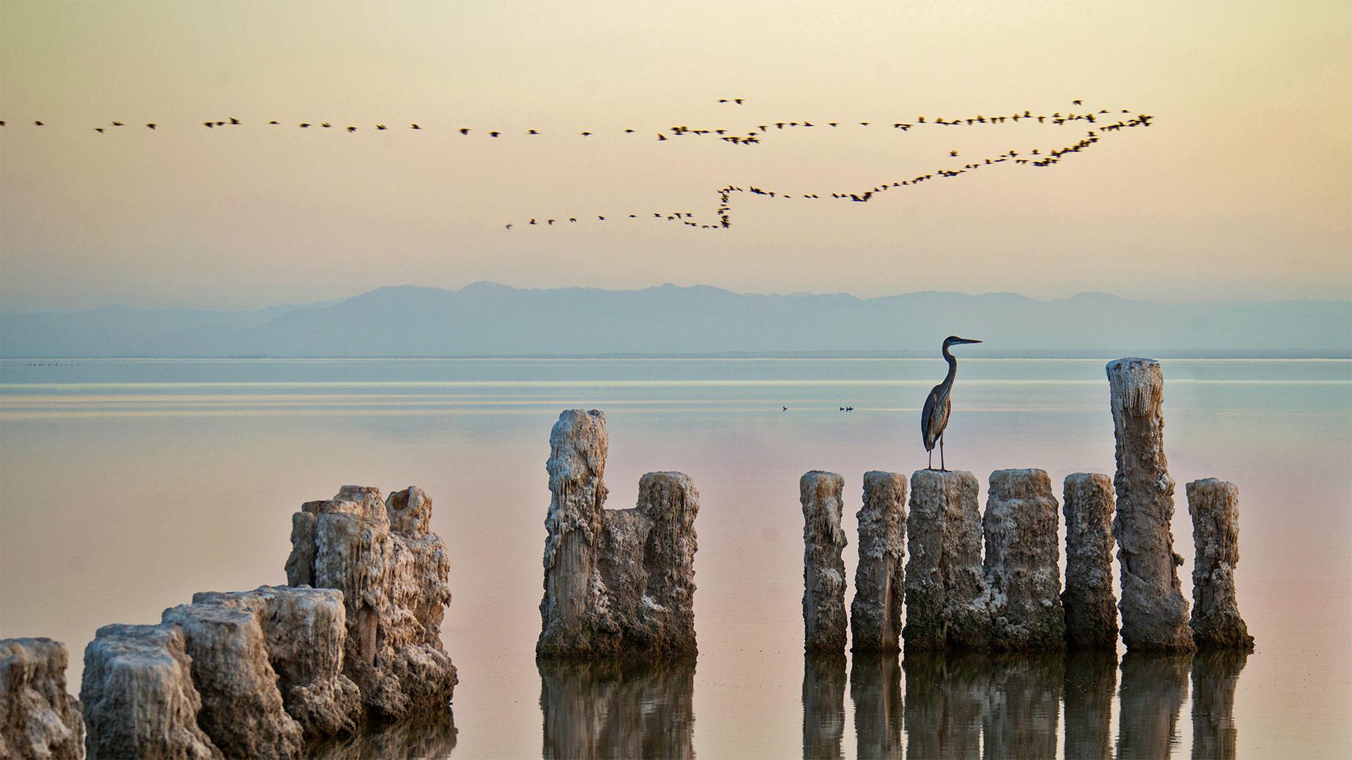 「ソルトン湖のサギ」米国カリフォルニア州 (© Garret Suhrie/Cavan Images)