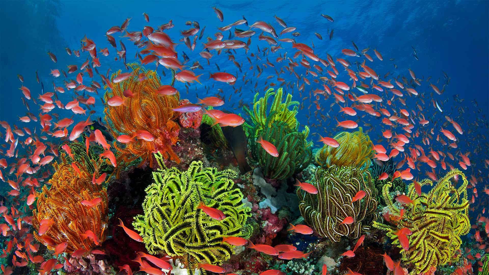 「サンゴとウミユリとキンギョハナダイ」オーストラリア, グレートバリアリーフ (© Gary Bell/Minden Pictures)