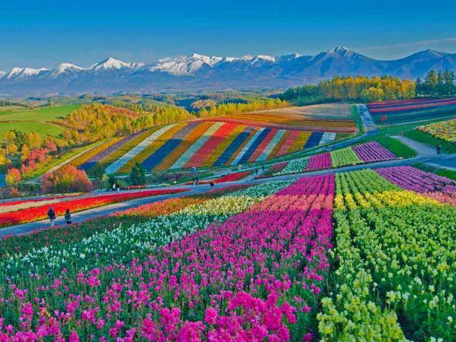 Shikisai no Oka flower gardens in Biei, Japan (© Tanya Jones/Shutterstock)