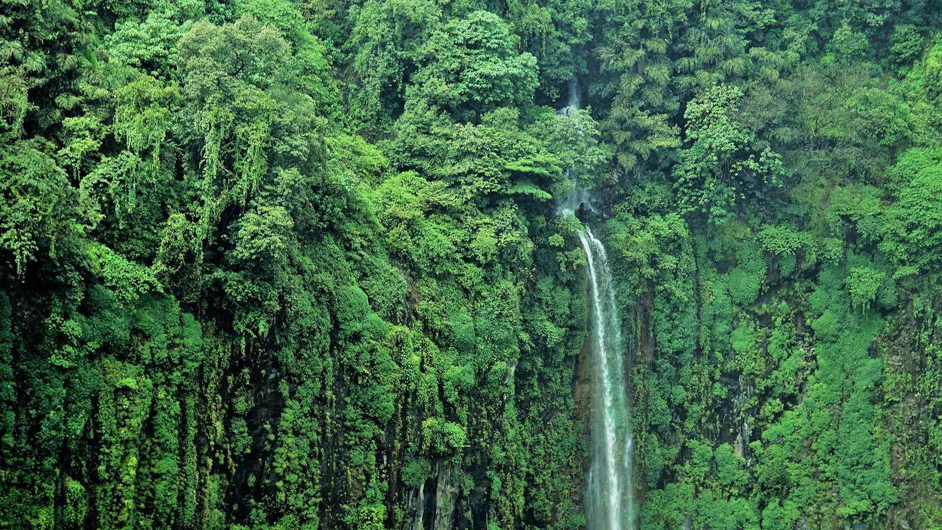 Cascade Thoseghar dans le Maharashtra, Inde (© Sonali Kumar/iStock/Getty Images Plus)(Bing France)