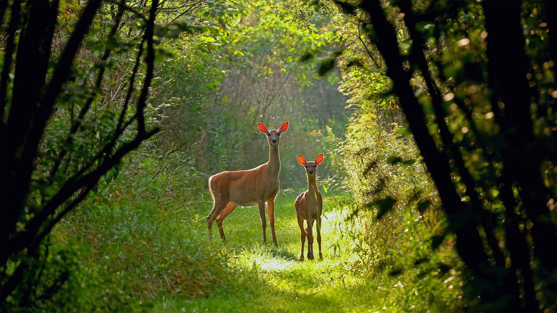「オジロジカの母子」米国ウィスコンシン州 (© Karel Bock/Shutterstock)