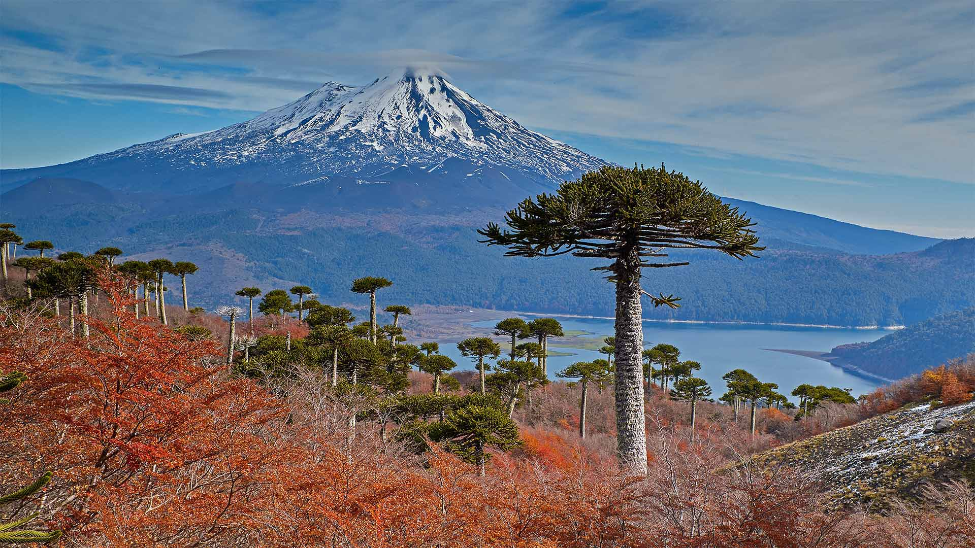 Volcano Llaima with Araucaria trees in the foreground, Conguillío National Park, Chile (© Fotografías Jorge León Cabello/Getty Images)(Bing United States)